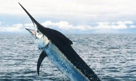 Büyük Boy Balık Avı