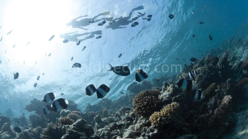 Maldivler'de Dalış