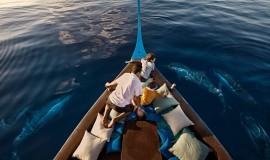 Maldivler Yunus ve Balina Gözlem Turu